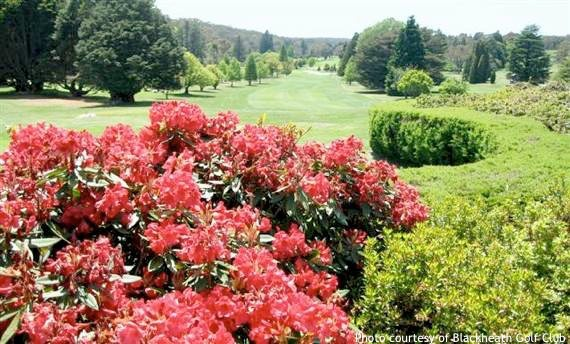 Golf Sydney: Flowers and shrubs around the fairway