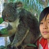 Koala Pictures, Where to Go