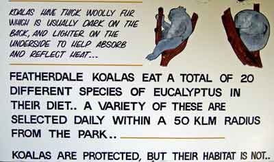 Board with koala pictures and information