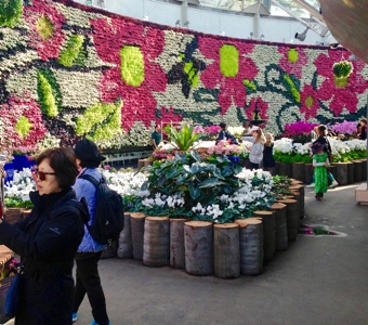 The green wall behind the winter floral display
