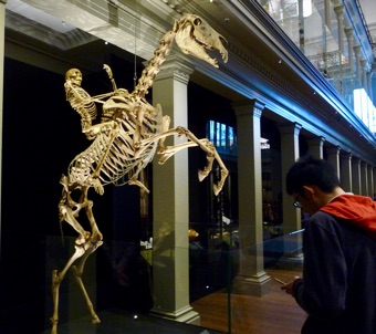 Sydney Open: Skeleton of horse and rider at the Australian Museum
