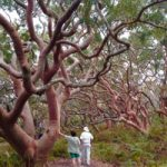 Sight Seeing From Sydney: Royal National Park & Bundeena